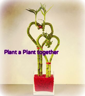Plant a Plant Togeher