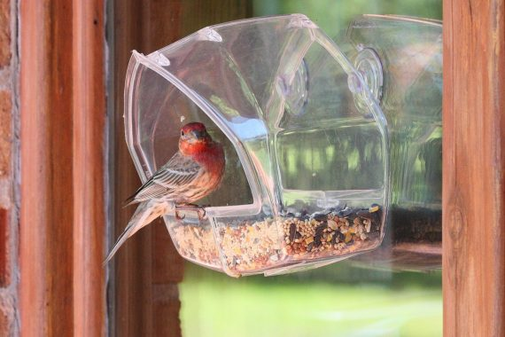 birdfeeder that attaches to your window so you can see the birds