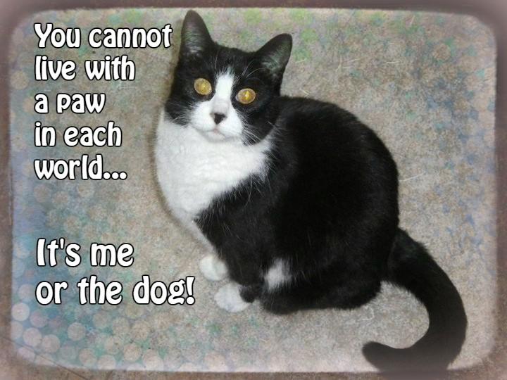 cat-quote